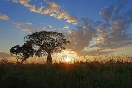 Samu'u Sunrise